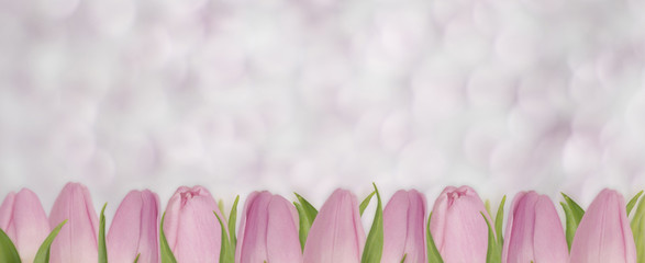 Valentines Day background with pink tulips. Bouquet of tulips with copy space. Flowers on bokeh background