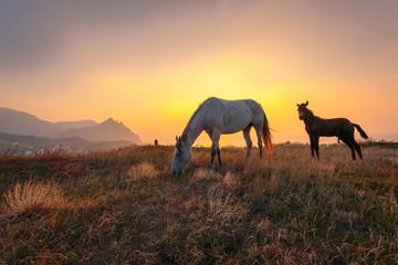 Beautiful sunrise landscape. Horse and foal on mountain pasture.
