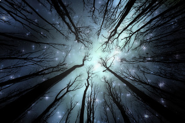 Night in forest illustration. Night sky with stars seen through trees in dark woods
