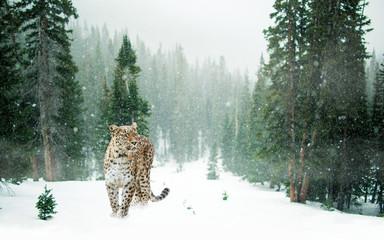 Poster Leopard Leopard im Schnee