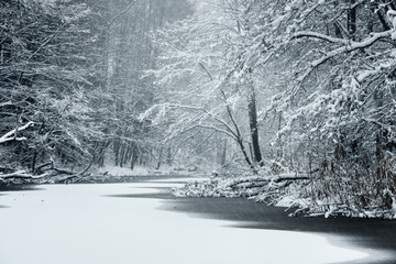 Forest lake covered with fresh snow during snowfall in Latvia