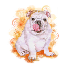 Watercolor portrait of white English or British bulldog breed dog isolated on orange background. Hand drawn sweet pet. Bright colors, realistic look. Greeting card design. Clip art. Add your text