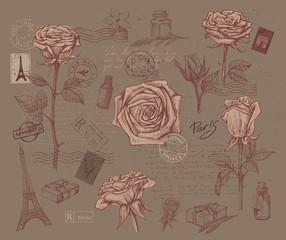 beautiful roses flower
