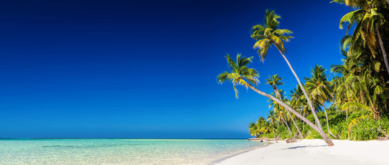 Foto auf Leinwand Tropical strand Panorama of tropical island with coconut palm trees on sandy bea