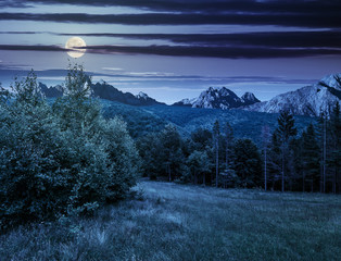Spruce forest on a meadow in Tatras at night