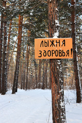 Ski track of health - sign in the winter pine forest