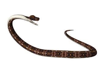 3D Rendering Gaboon Viper Snake on White