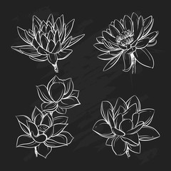 Sketch floral botany collection in graphic black and black style