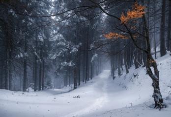 Ukraine. Zakarpatsky region. Winter forest on the way to Petros