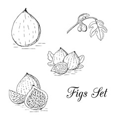 Hand drawn graphic fruits of fig set on the white background.