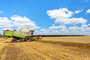 Wall Mural - Combine harvester on a wheat field with blue sky.