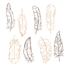 Graphic beige and brown feather set. Hand drawn vector illustration.