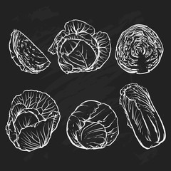 Vector cabbage isolated on a black background. Hand drawn sketch
