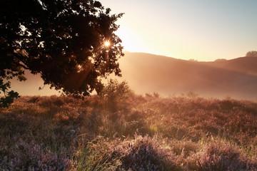 sunbeams through oak tree branches