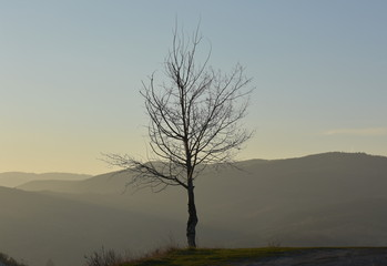 Top of the world - tree on the mountain in the sunset light