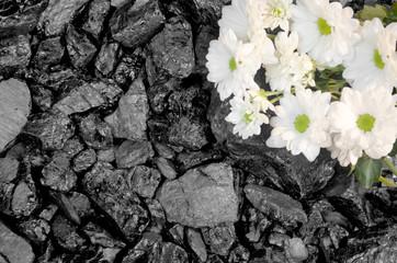 Stone coal white daisies background