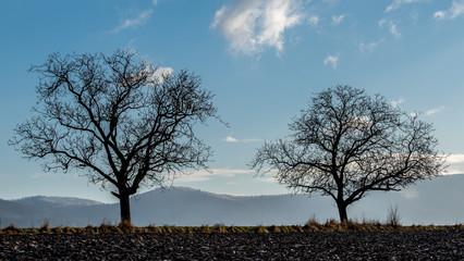 Odenwald im Winter