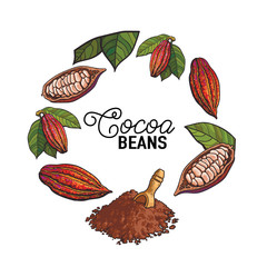 Round frame of cacao fruit, beans and powder with place for text, sketch illustration isolated on white background. Cacao fruit, beans, powder forming round frame for chocolate banner, poster design