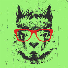 Portrait of Lama with glasses. Hand drawn illustration. Vector.