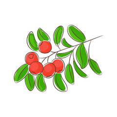 Drawing cowberry/ Drawn red cowberry with green leaves. Vegetarian food, useful dessert with northern berries