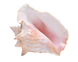 Large pink queen conch seashell isolated on white background