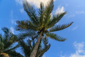 Palm tree and sky.