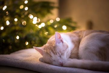 christmass cat