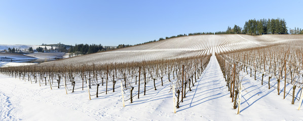 Winter Snow In the Grape Fields of Western Oregon