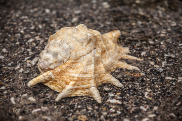 Sea shell on sand. Summer beach background