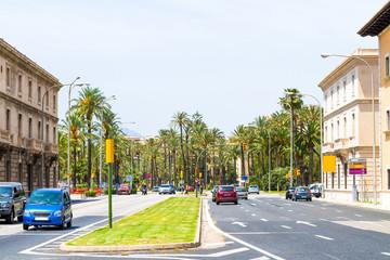 Palma Mallorca famous seaside palm trees promenade sightseeing tour
