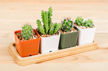 Different succulents and cactus in pots.