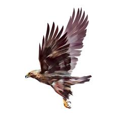 painted flying eagle isolated on white background