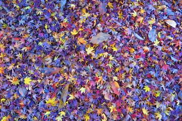 エコパークの秋の風景1