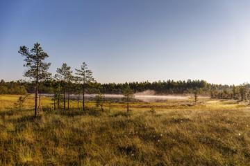 Morning fog over lake and marsh