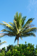 Coconut tree  and the blue sky