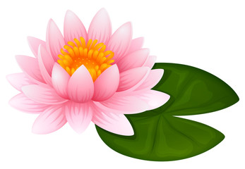 Pink lotus on green leaf