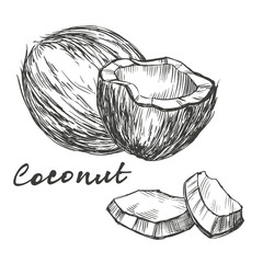 coconut set hand drawn vector illustration realistic sketch