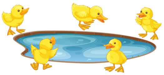 Five little ducks around the pond