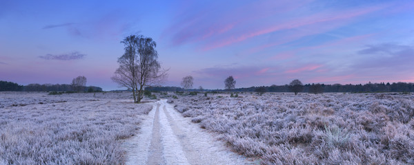 Fototapete - Path through frosted heather in winter in The Netherlands