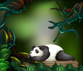 Panda sleeping in the dark forest
