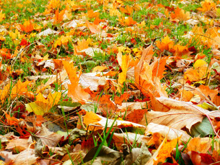 color detail photography of golden autumn leafs on ground