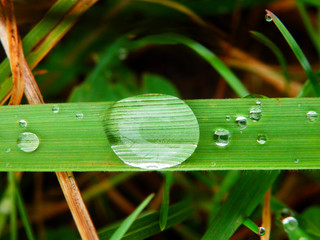 color macro photography of raindrop on grass
