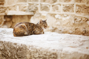 Wild city cat sitting on a stone wall
