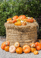 Pumpkins on straw bale