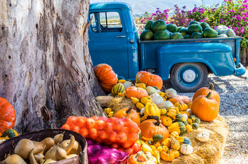 Old truck with vegetables and fruit parked next to tree