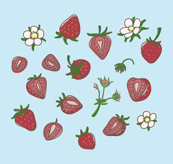 set strawberry hand drawn on light blue background. Vector illus