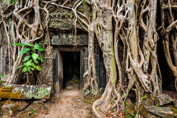 Ancient ruins of Ta Prohm temple, Angkor, Camb