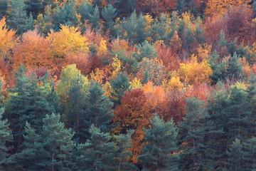 forêt aux couleurs d'automne