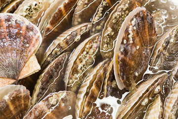Closeup of fresh scallop sea shell at market