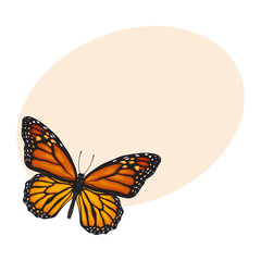 Top view of beautiful monarch butterfly, sketch illustration isolated on background with place for text. color Realistic hand drawing of monarch butterfly on white background